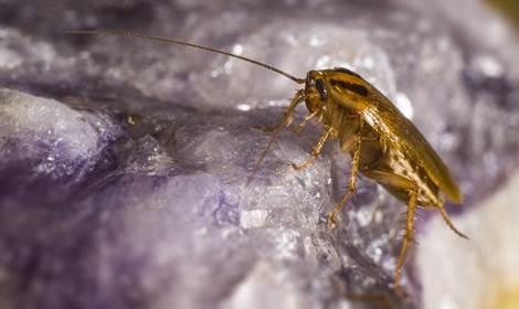 Kakkerlakken in huis